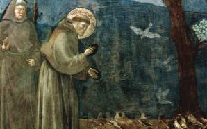 San Francesco arriva sui social network